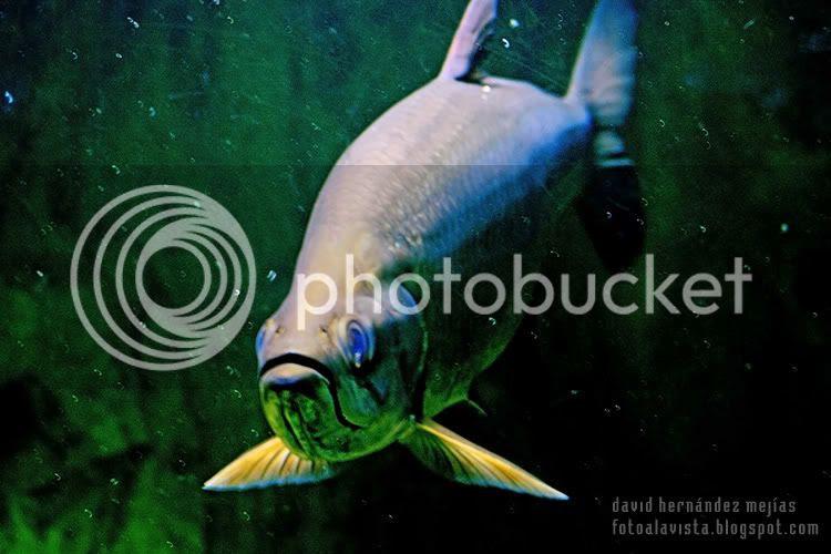 Fotografía realizada a un pez en el Aquarium del Parque Zoológico de Madrid