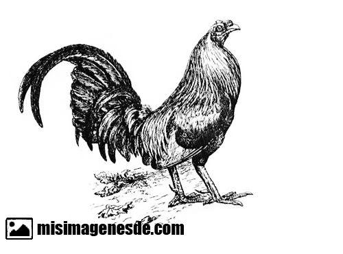 Dibujos De Gallos Para Colorear