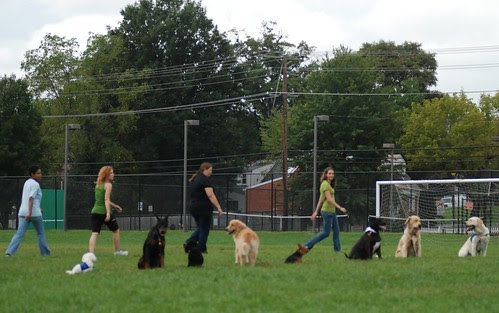 Group Stays at Laurel Dog Show