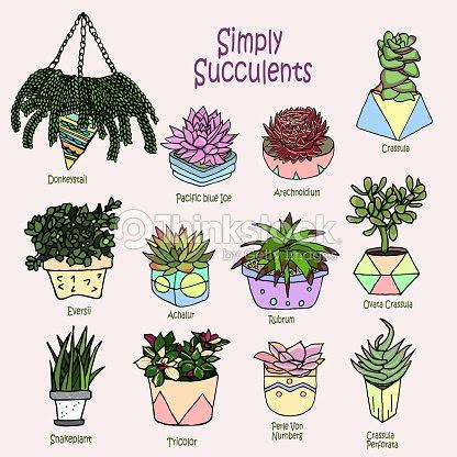 ベクトル漫画の落書きイラスト多肉植物コレクション小さな庭家の植物背景