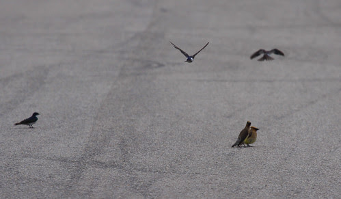 Birds resting on Goose Pond Road.