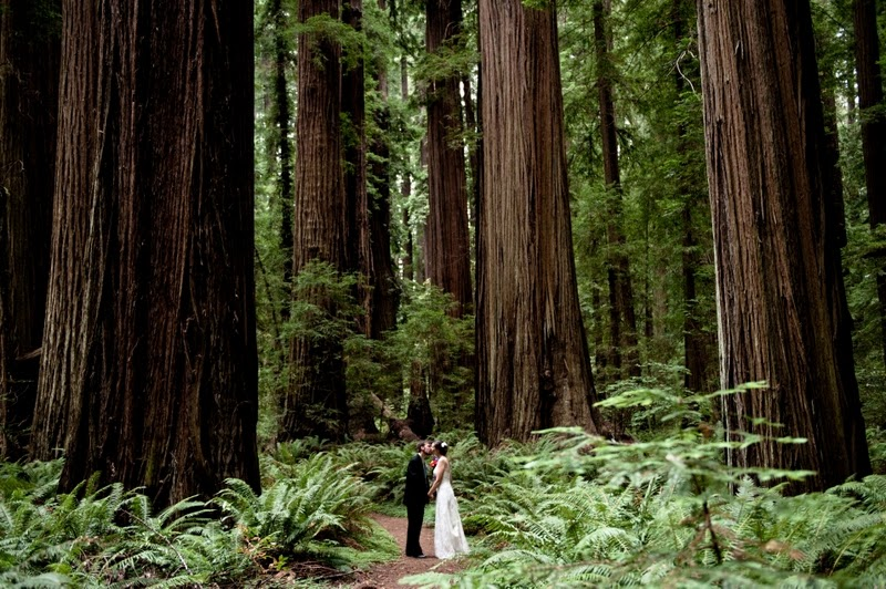 a living space the wedding ones venues in the redwoods