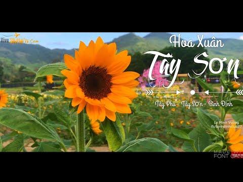 Vườn hoa xuân Tây Phú - Tây Sơn địa điểm chụp ảnh hot nhất 2020 ở Bình Định