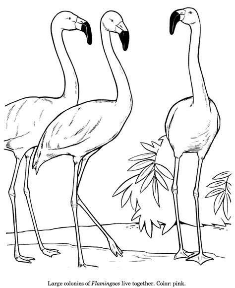 animal drawings coloring pages flamingo bird
