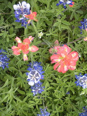 Close-up of wildflowers