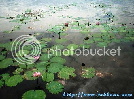 photo 07KampungAirBukitMerakLaketown_zpsd9999cfa.jpg