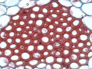jaringan kumpulan sel