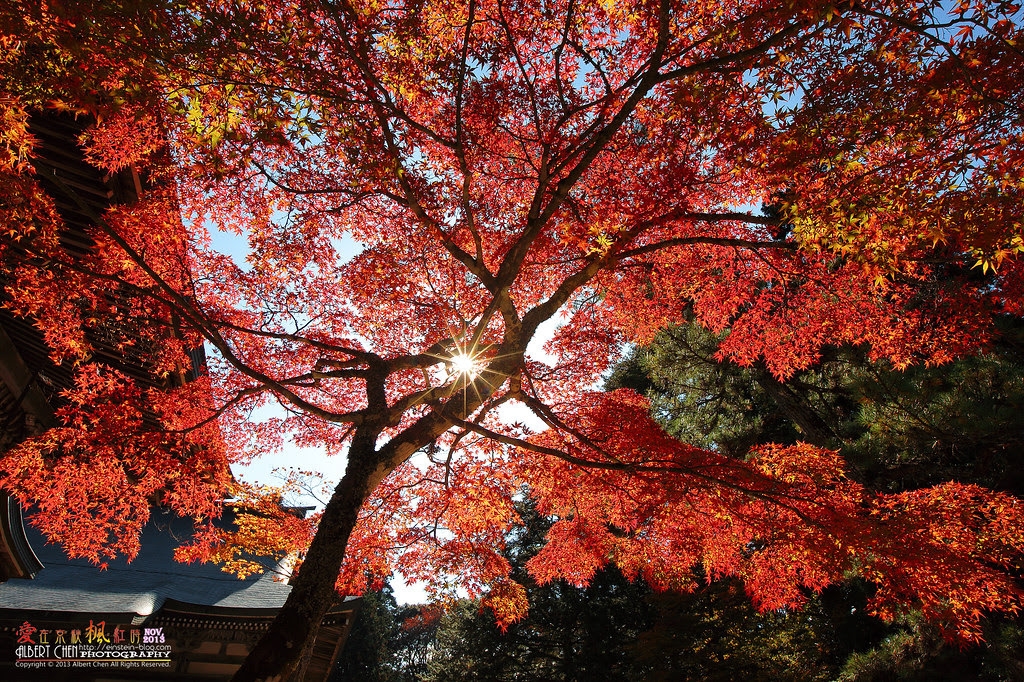 2013-11-19 11.31.45IMG_9128