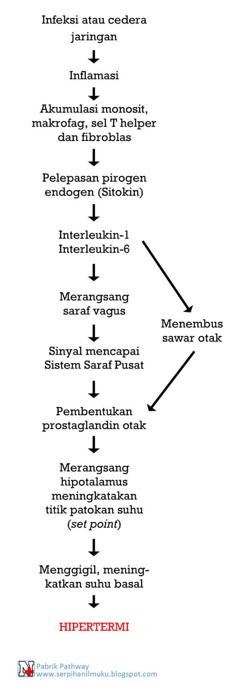 Pathway Demam (Hipertermi)