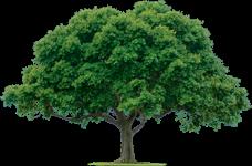 Planta Tu árbol Málaga Viva