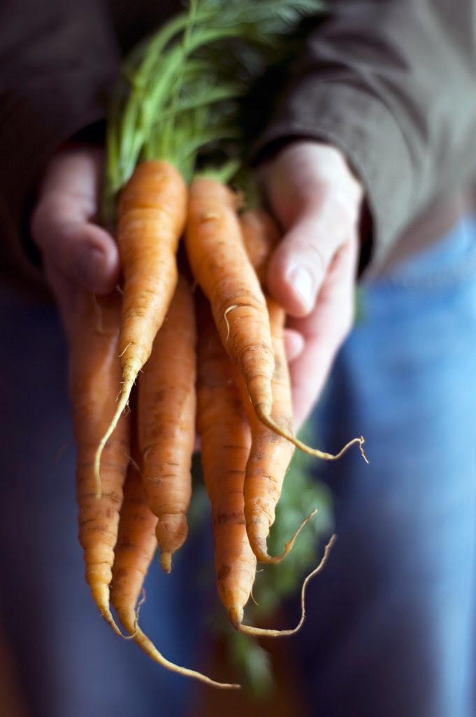 cenouras // carrots
