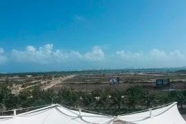 Aspecto del manglar en Tajamar. Foto: Especial