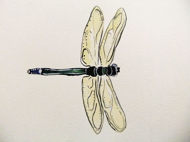 Dragon Fly-Original Watercolor Painting - jasonpaints1