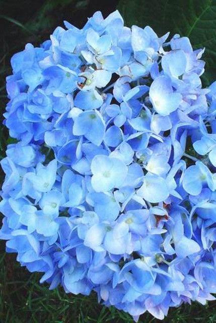 Blue  color change