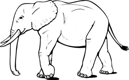 Fil Boyama Kitabı Resimleri Ve Fotoğrafları