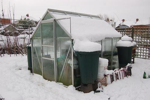 allotment snow Jan 13 3