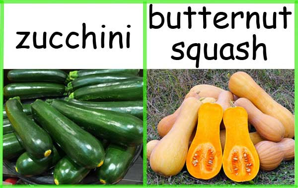夏南瓜 嫩南瓜 奶油南瓜 冬季南瓜 summer squash zucchini butternut squash winter