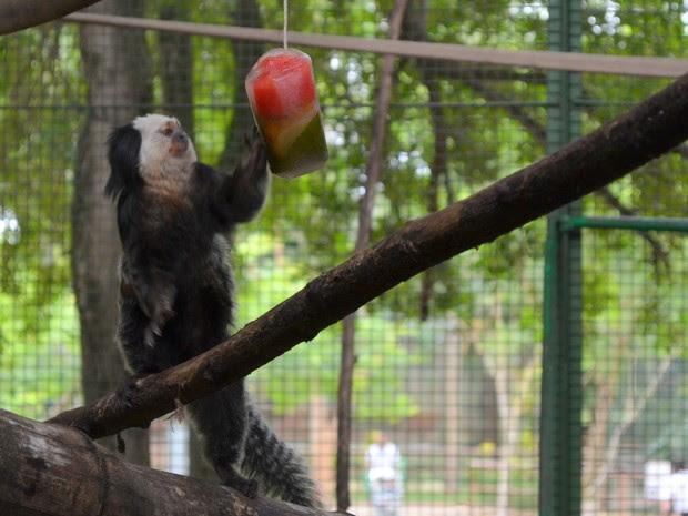 Animais do Zoológico Municipal de Piracicaba ganharam picolés nesta sexta-feira (11) (Foto: Luiz Felipe Leite/G1)
