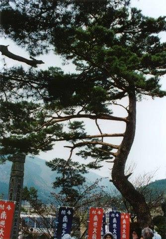 treepineprayerflag