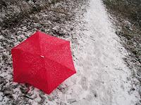 Photo by Sheila Webber: It snowed today a bit,
