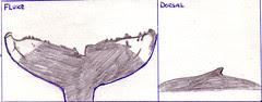 Tusk drawing