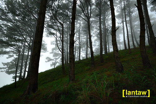 Salacsac Pine Forest