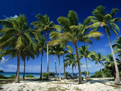 Planting Palm trees to help improve coastal economy in