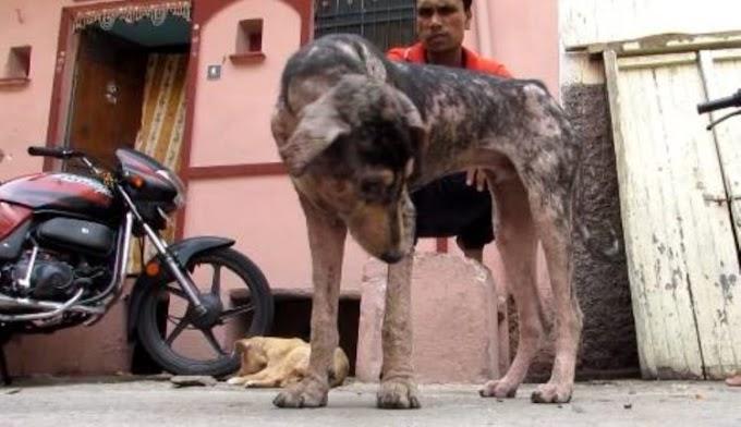 Un simple gesto de amor salvó a un perrito que sufría en la calle con sarna y dolorosas llagas