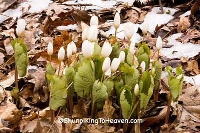 Bloodroot, Dane County, Wisconsin