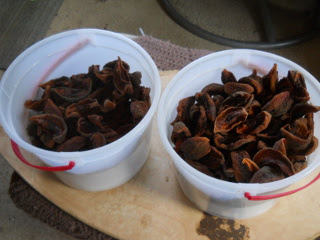 Dried Nectarines Collected in Buckets