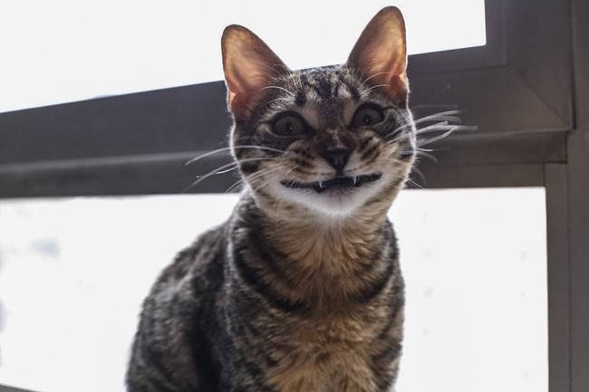 animais-sorrindo-3