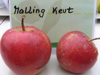 Apfel Malling Kent Foto Brandt