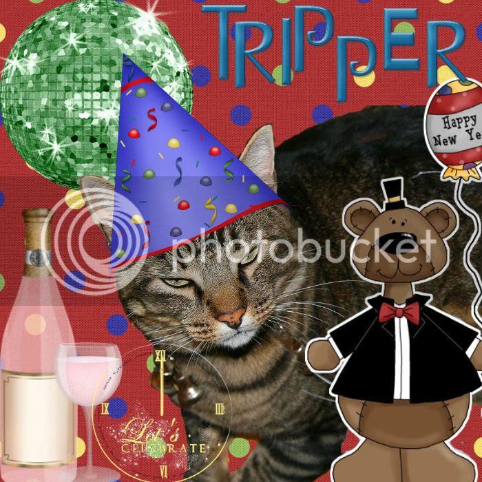 Tabby Cat,Happy New Year