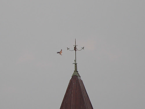 Red-Tailed Hawks Perched on Wadleigh School