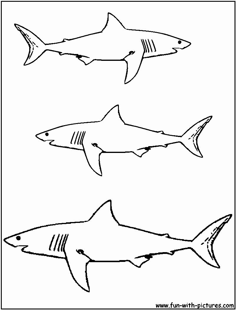 Megalodon Shark Drawing at GetDrawings | Free download