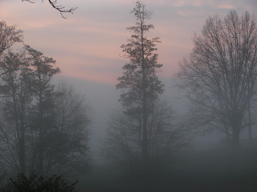 Foggy Trees by paynehollow