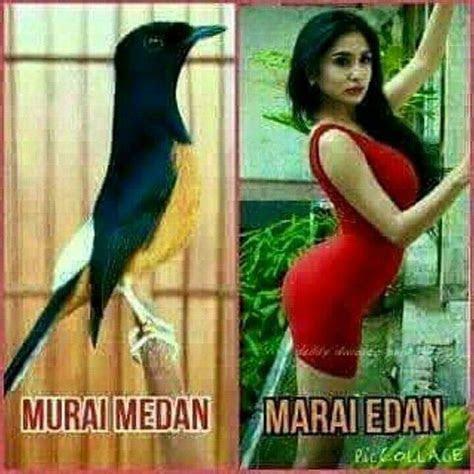 meme lucu tentang burung  menghibur kicau mania
