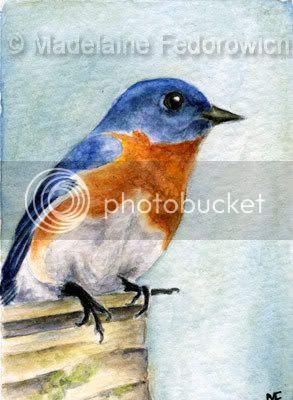 Blue Bird ACEO