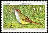 Zapata Sparrow Torreornis inexpectata