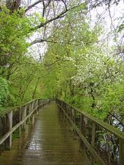 The Beautiful Boardwalk