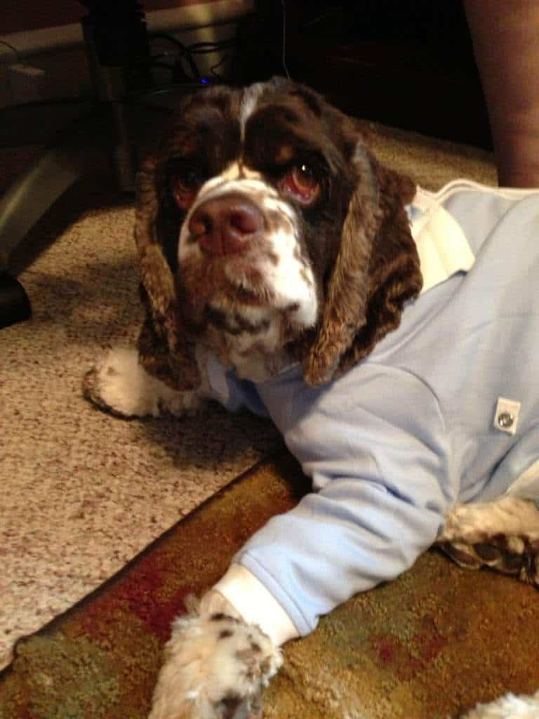 Dexter from Fidose of Reality not only looks adorable in his onesie, but it's helping with his allergy symptoms.