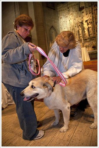 Blessed Dog