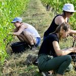 Jura | Le vignoble du Jura recense les terres où planter de nouvelles vignes
