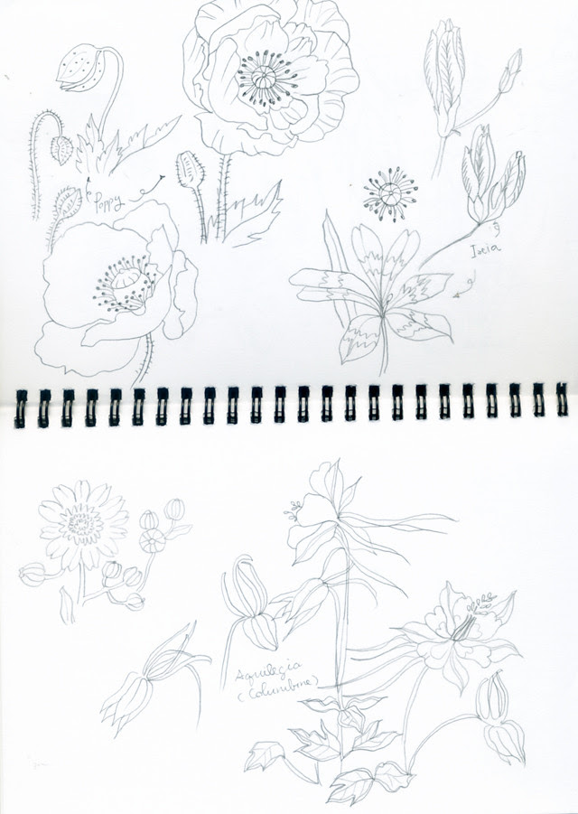 flowers pencil sketches