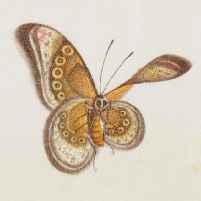 Butterfly Album sketch 1800s - China