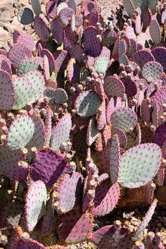 Phoenix, Arizona - Cactus by Gordon King (Thanks for 30,000 views), via Flickr