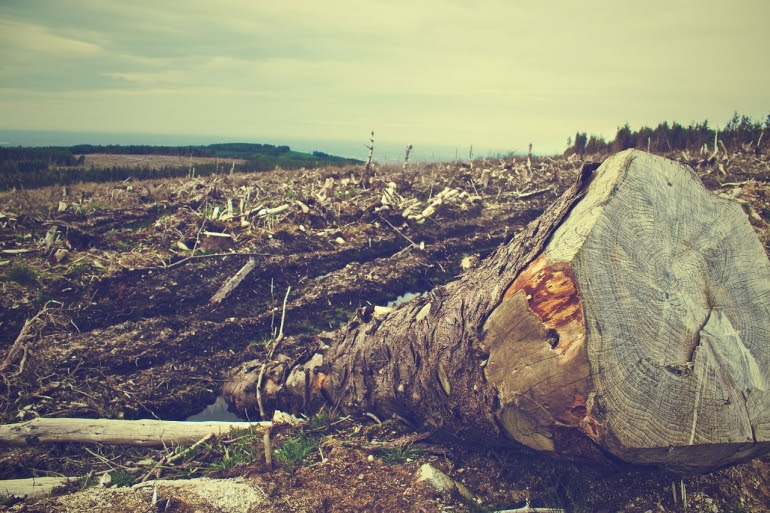 Livestock farming is a leading cause of deforestation