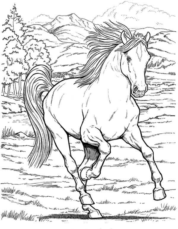 Coloriage Cheval Sauvage Imprimer 1001 Animaux