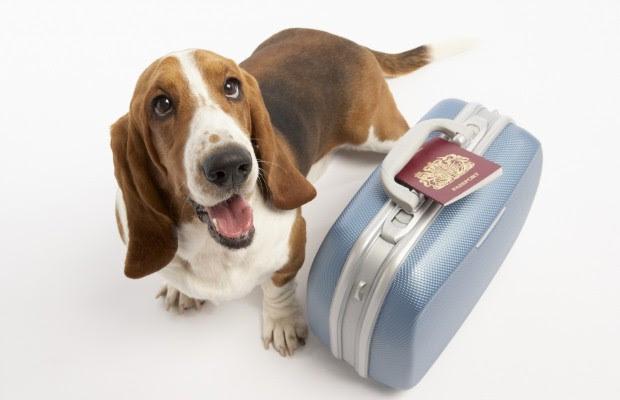 Memorial Weekend Vacation Tips - City Dog Expert