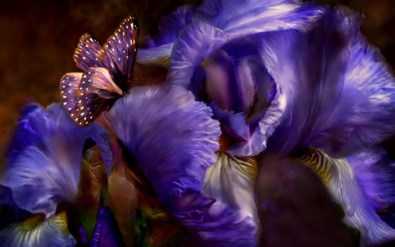 The Purple Butterfly - yorkshire_rose Wallpaper (20519995 ...